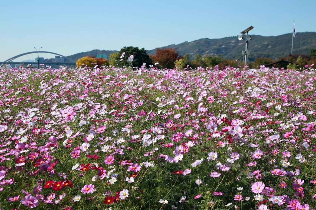 구리한강시민공원 사진2