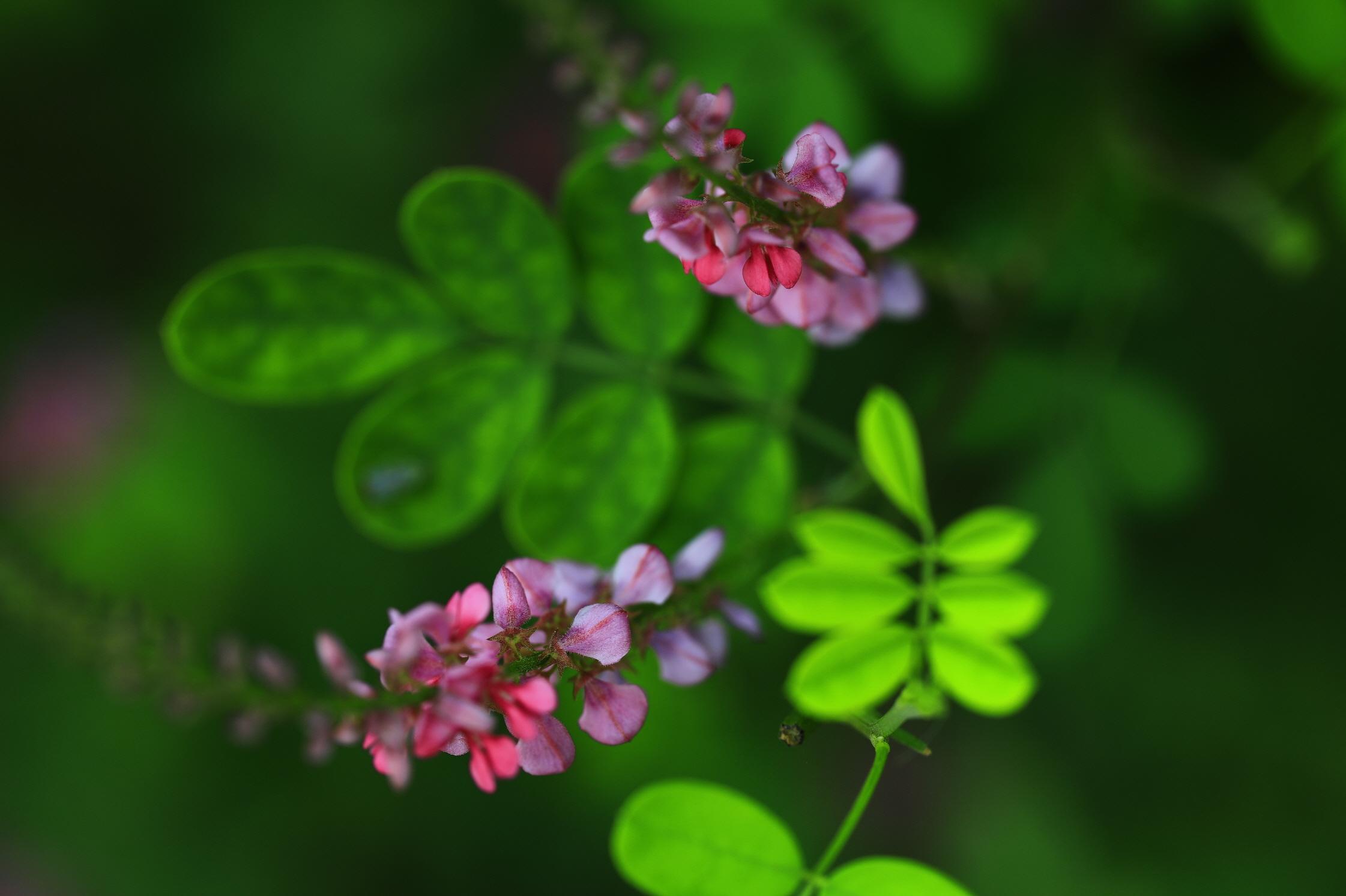 비봉습지공원 꽃 사진