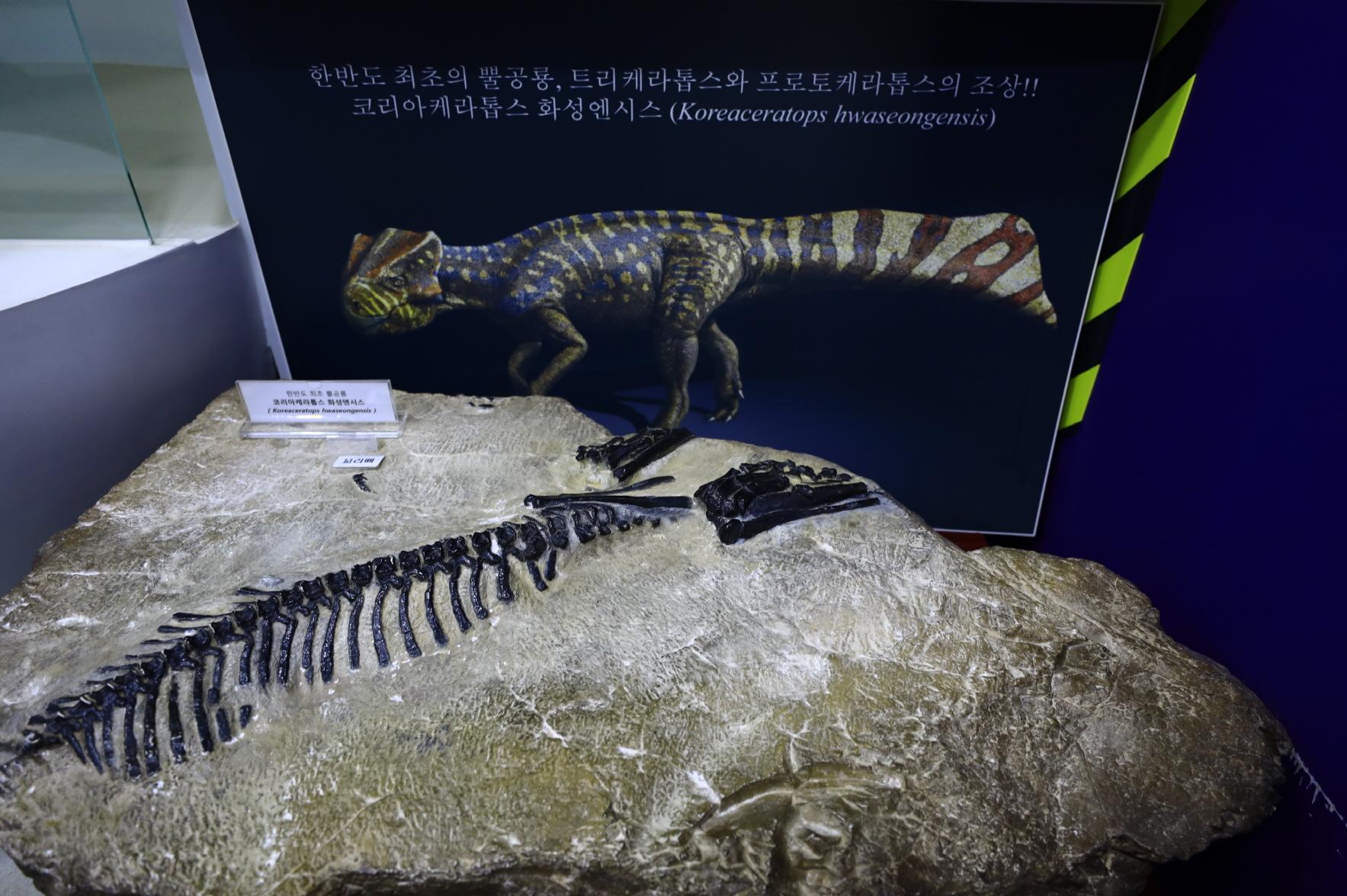 공룡알 화석지 사진3