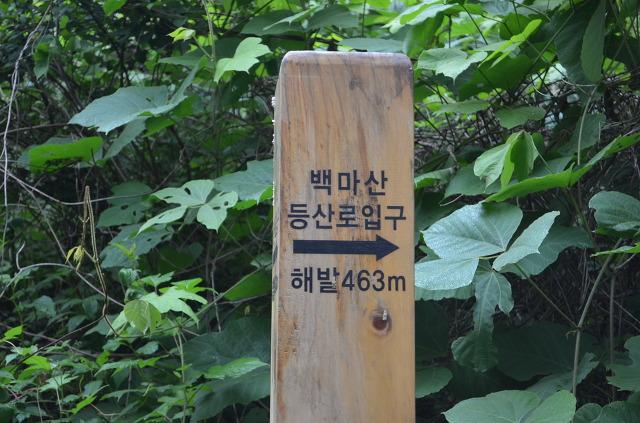 백마산 등산로입구 해발463m라고 쓰여진 안내판