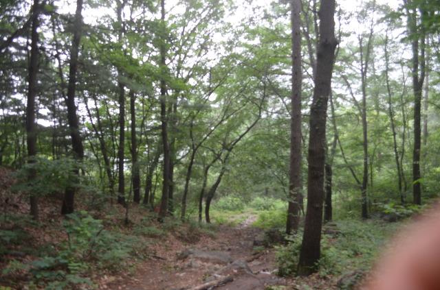 나무가 가득한 산길의 모습