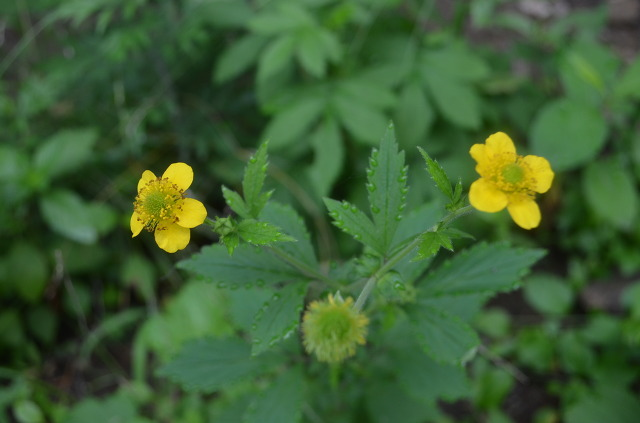 노란 꽃의 모습