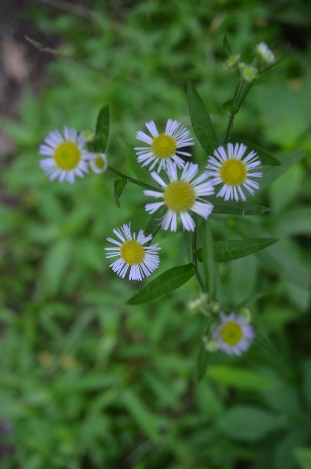 꽃의 모습
