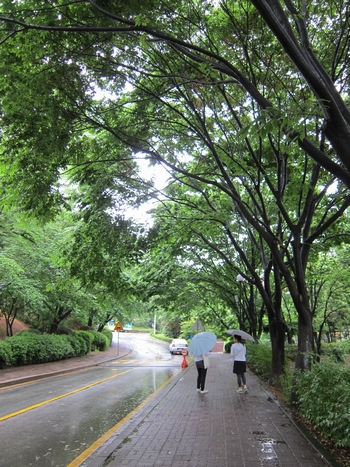 우산을 쓰고 산책하는 사람들의 모습