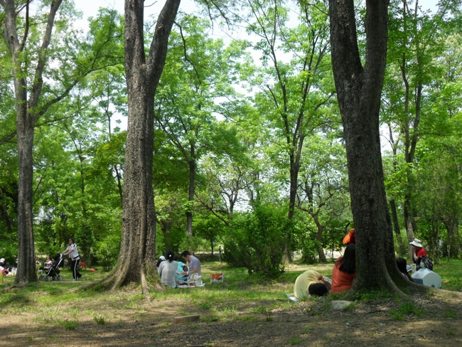 나무 그늘에서 돗자리를 피고 앉은 사람들의 모습