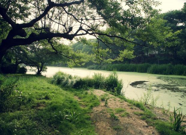 푸른나무들과 호수의 모습