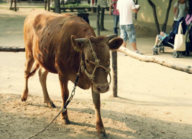 소의 모습