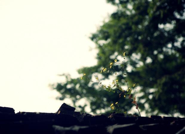 지붕위에 핀 꽃의 모습