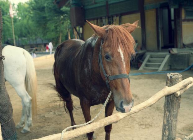 갈색 말의 모습
