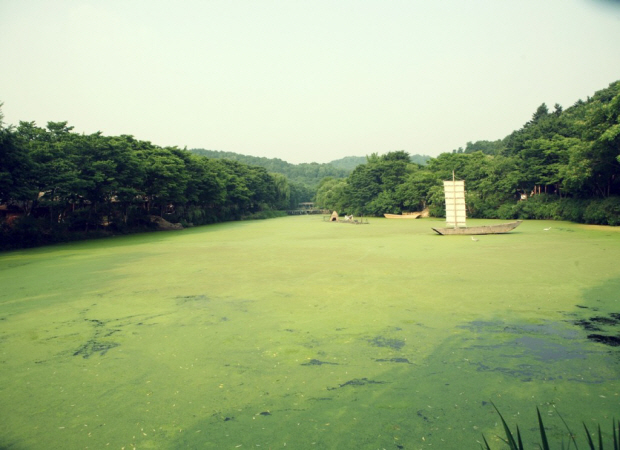개구리밥이 가득한 호수와 나룻배의 모습