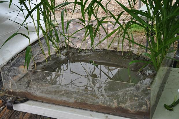 물에 띄워놓은 갈대잎 돛단배
