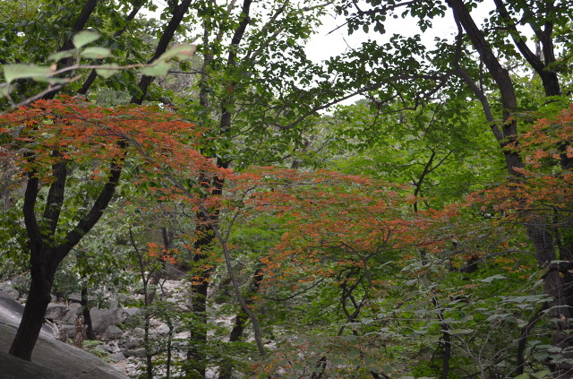 숲의 모습