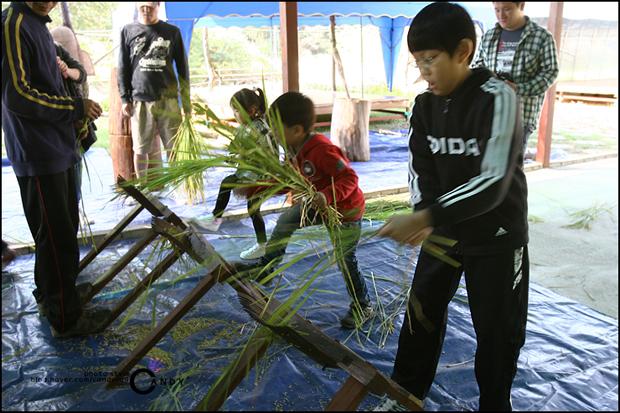 탈곡기에 벼이삭을 틀어주는 체험을 하는 아이들