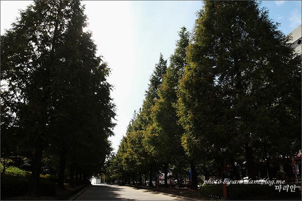 나무가 울창한 산책로의 모습