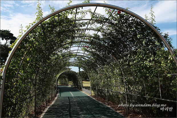 꽃으로 덮어놓은 터널