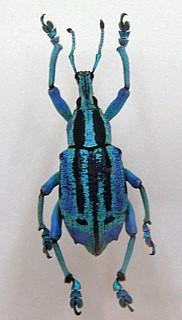 하늘색 벌레의 모습