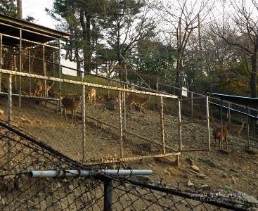 사슴들의 모습