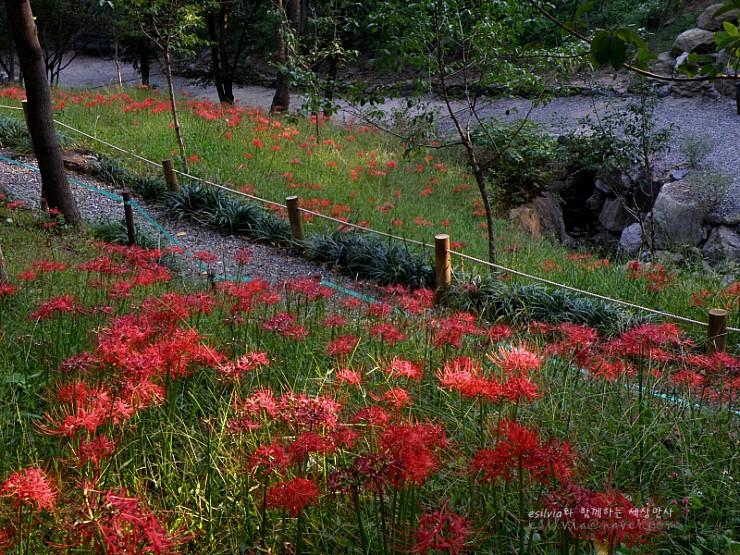 붉은 꽃밭