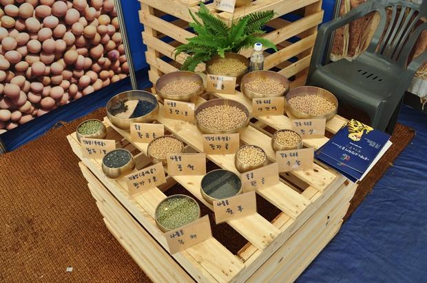 여러가지 콩들의 모습