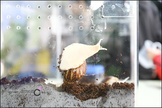 유리벽을 타는 달팽이의 모습