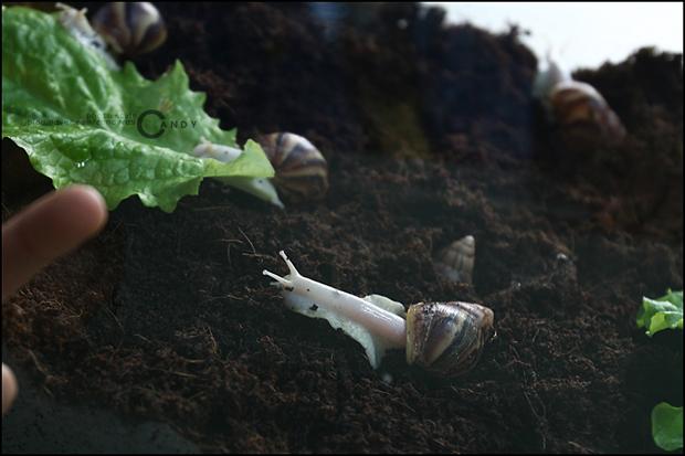 흙 속에 달팽이의 모습