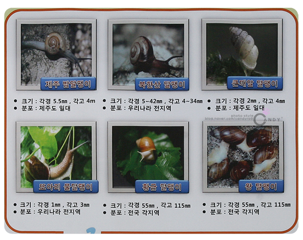 [제주 밤달팽이]크기 : 각경5.5mm, 각고4m 분포 : 제주도 일대[북한산 달팽이]크기 : 각경5~42mm, 각고4~34m 분포 : 우리나라 전지역[큰깨알 달팽이]크기 : 각경2mm, 각고4m 분포 : 제주도 일대[또아리 물달팽이]크기 : 각경1mm, 각고3m 분포 : 우리나라 전지역[황금 달팽이]크기 : 각경55mm, 각고115m 분포 : 전국 각지역[왕 달팽이]크기 : 각경55mm, 각고115m 분포 : 전국 각지역