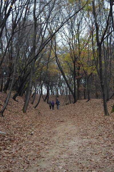 숲길을 오르는 모습