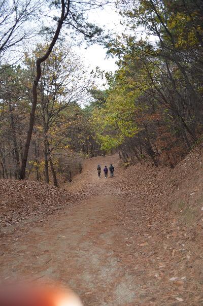 숲길을 걷는 사람들의 모습