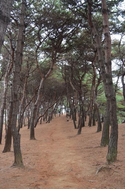 나무가 울창한 길