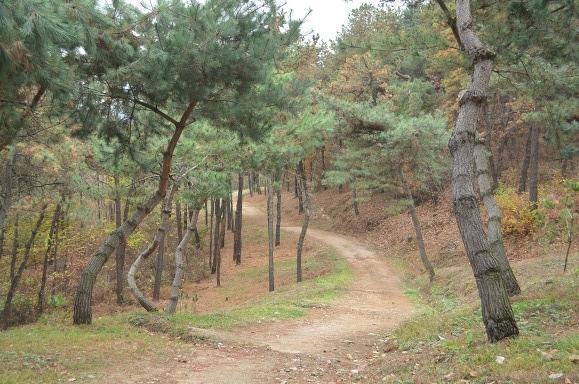 구불구불 난 숲길