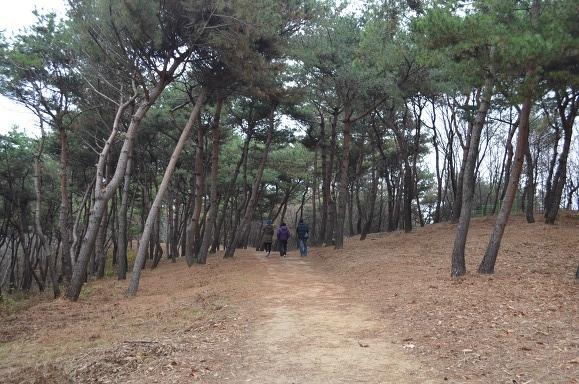 숲을 걷는 사람들의 뒷모습