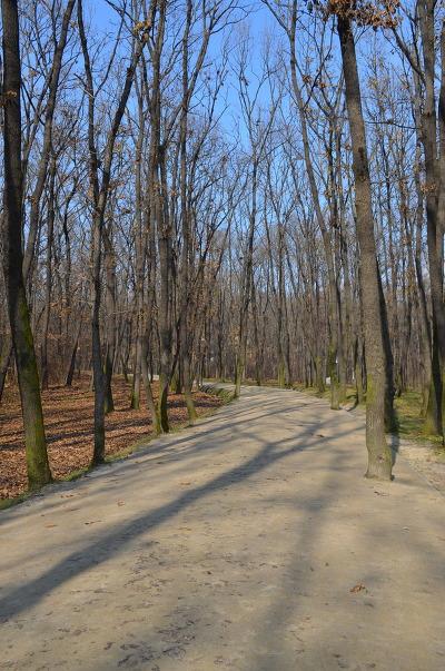 나무가 울창한 산책로