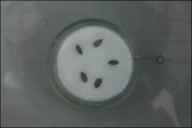씨앗들의 모습