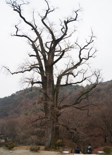 커다란 나무의 모습