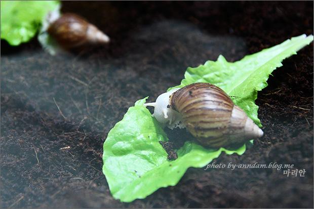배추 위에 올라간 달팽이