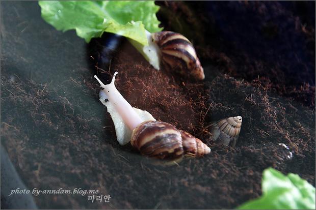 흙 위에 앉아있는 달팽이의 모습