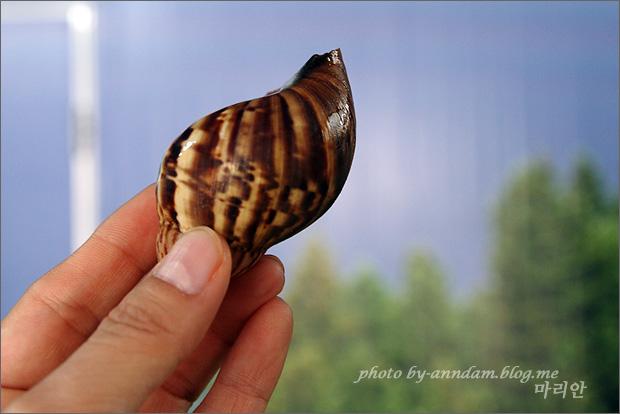 달팽이 껍데기