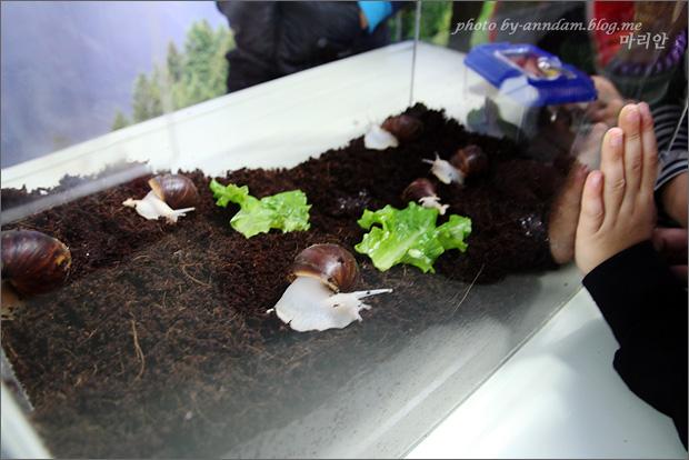 달팽이들의 모습