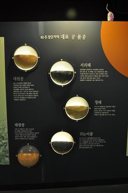 파주장단지역 대표 콩 품종의 설명과 모습
