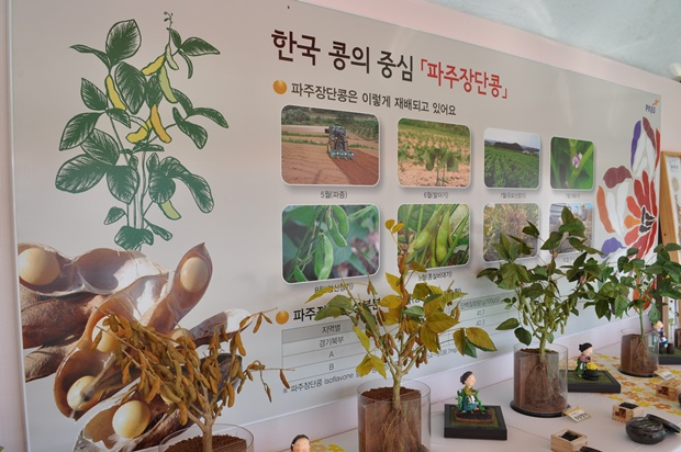 한국 콩의 중심 파주 장단콩의 재배과정 사진