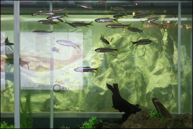 수조에 물고기들