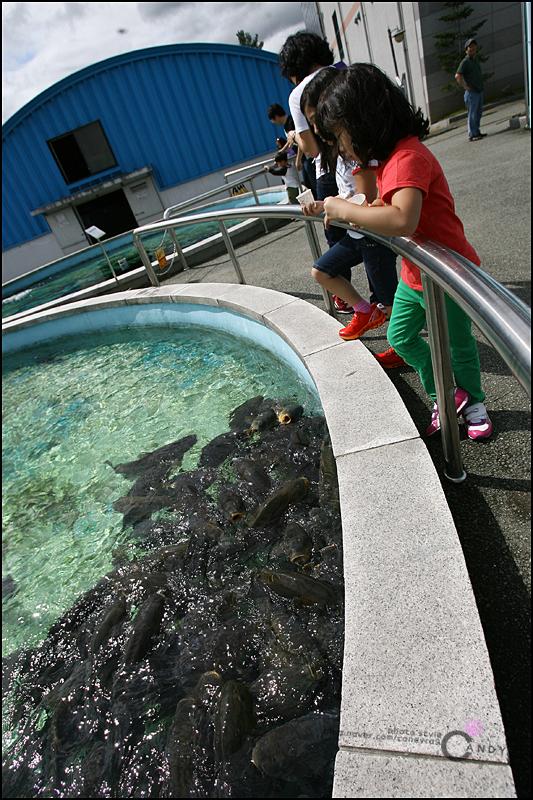 물고기들을 구경하는 아이들