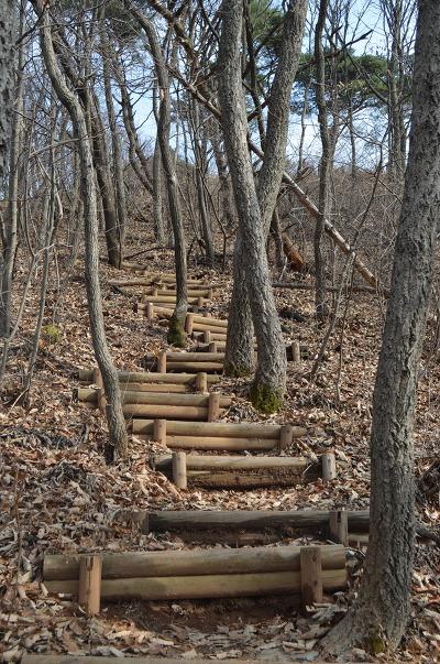 숲 사이로 난 나무계단