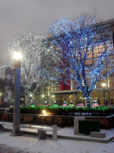 나무에 불빛이 들어 온 모습