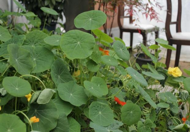 동그란 잎의 모습