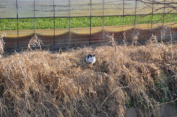 들고양이의 모습
