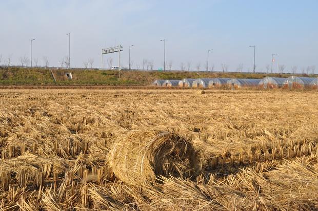 황량한 밭의 모습