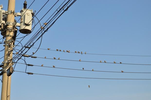 전깃줄에 쪼르르 앉아있는 참새들