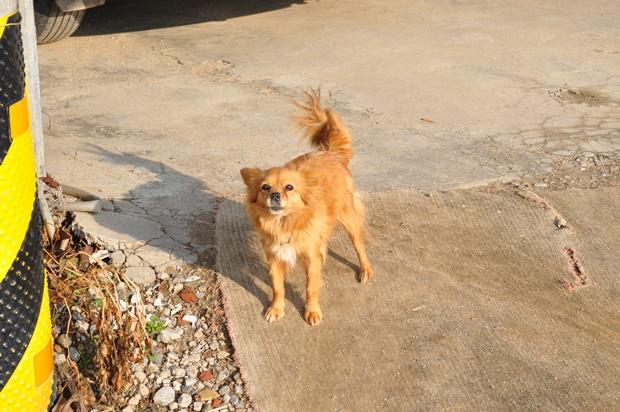 강아지의 모습