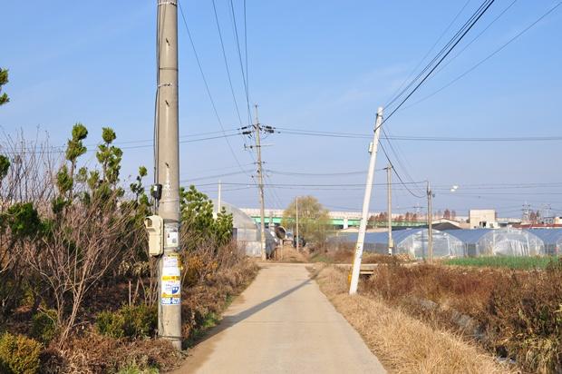 시골길의 모습